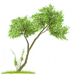 tree green nature vector image