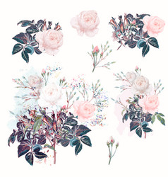 beautiful set rose flowers in watercolor style vector image