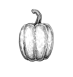 Black and white hand drawn sketch of a pepper vector
