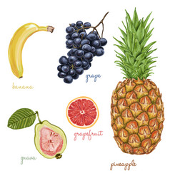 exotic juicy delicious fruits vector image