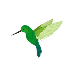 Flat icon flying colibri small tropical vector