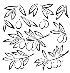 Olive branches leaves and berries vector