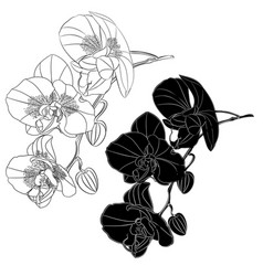 Orchid phalaenopsis outline and silhouette set vector