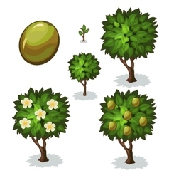 Planting and cultivation of olive vector image