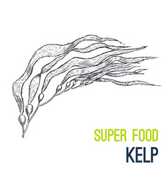 Kelp super food hand drawn sketch vector