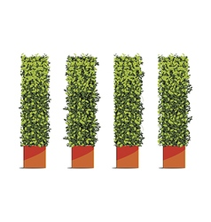 tree wall cube vector image