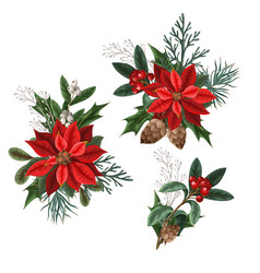 botanical berries pines and leaves for christmas vector image