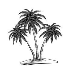 hand drawn sketch palm trees in black isolated vector image
