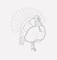 turkey icon line element of vector image