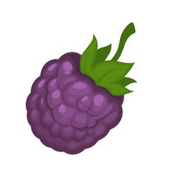 Cartoon tasty violet wild forest blackberry vector