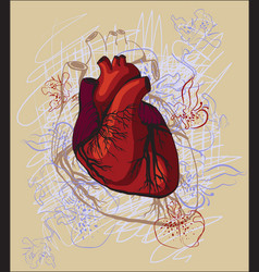 Drawing heart anatomical vector