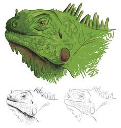 Iguana vector