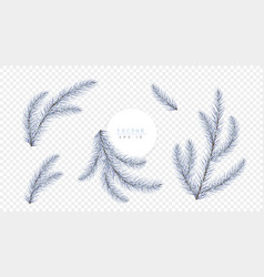White christmas tree branches isolated on vector