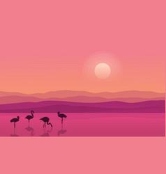 At sunrise lake scene with flamingo silhouettes vector