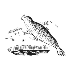 fur seal resting on ice Hand drawn vector image