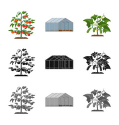 greenhouse and plant icon vector image