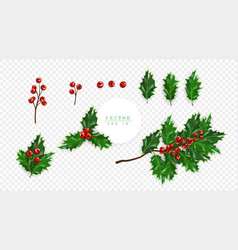 Holly berry set symbol of christmas isolated on vector