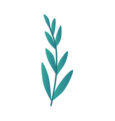 leaf branch in turquoise vector image