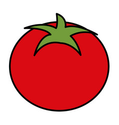 Tomato vegetable healthy food vector