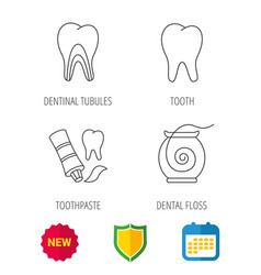 Tooth dentinal tubules and dental floss icons vector