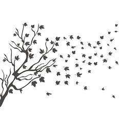 maples falling background vector image