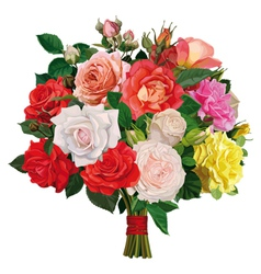 bouquet of colored roses vector image