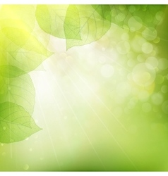 Background of green leaves EPS 10 vector