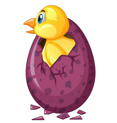 Bird comes out of purple egg vector