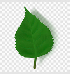 realistic green leaf with shadow on transparent vector image