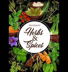 seasoning natural herbs and spices vector image