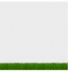 spring green grass border vector image