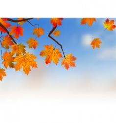 Yellow maple autumn vector