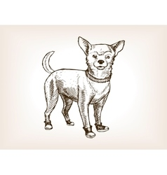 Chihuahua dog sketch vector