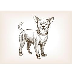 Chihuahua dog sketch vector image
