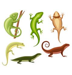 flat lizards collection cartoon chameleon climb vector image