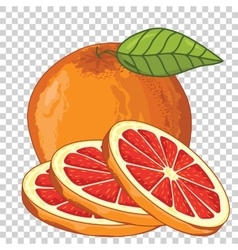 Grapefruit Isolated vector