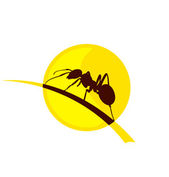 Ant from sun dawn vector
