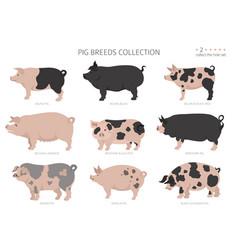 Pig breeds collection 2 farm animals set flat vector