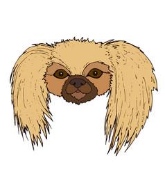 cute face pekingese dog isolated on white vector image