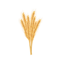 barley oat set plant spikelet with ears grains vector image