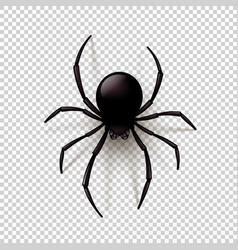Black spider on checkered background vector