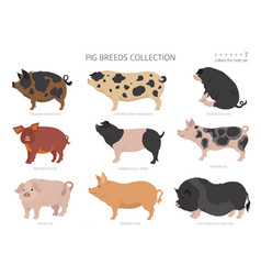 Pig breeds collection 7 farm animals set flat vector