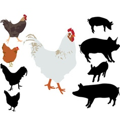 Rooster chiken pigs silhouettes vs vector
