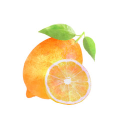 watercolor lemon fruit with leafs on white vector image vector image