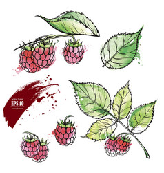 hand drawn raspberry colored sketch vector image