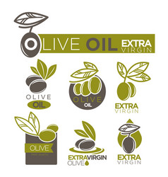 olive oil extra virgin product label vector image