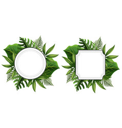 two frame template with green leaves vector image