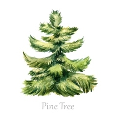 Watercolor christmas tree vector image vector image