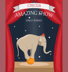 circus trained elephant on the ball vector image
