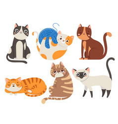 Cute cats fluffy cat sitting kitten character or vector